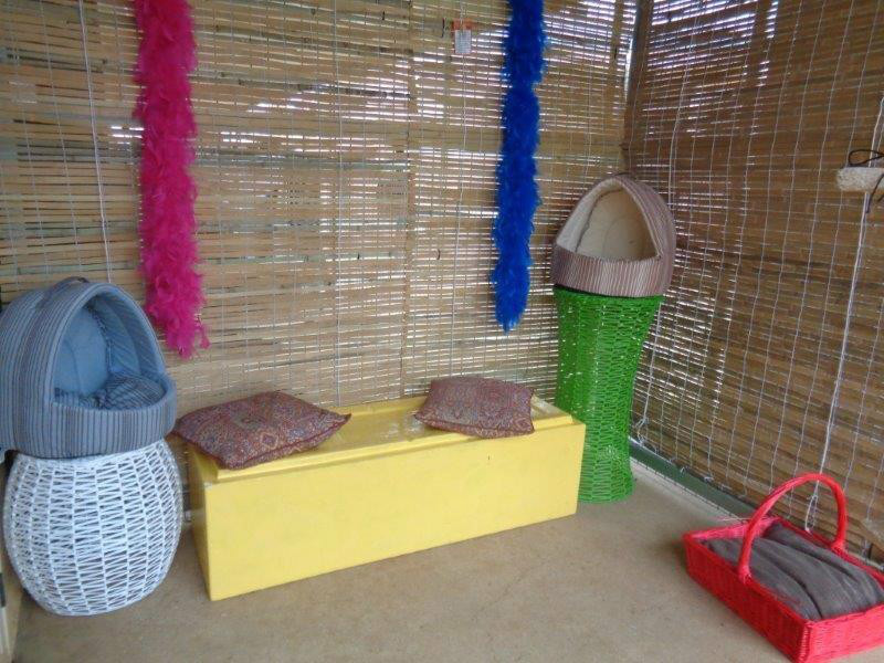 Cattery outside area