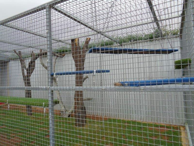 Cattery external play area real trees and grass