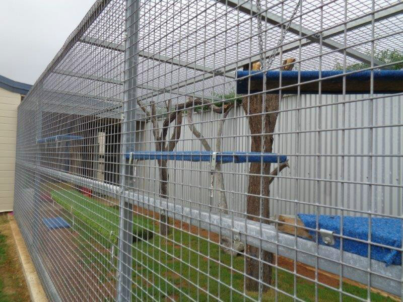 Cattery external play area