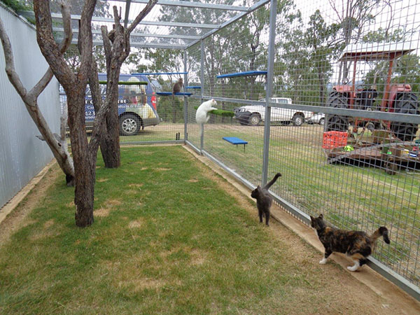 Dog Boarding Kennels Townsville Qld