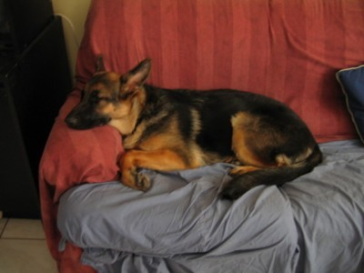 Marlowe sleeping