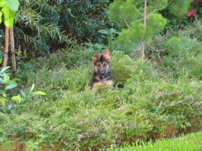 Charli in back garden