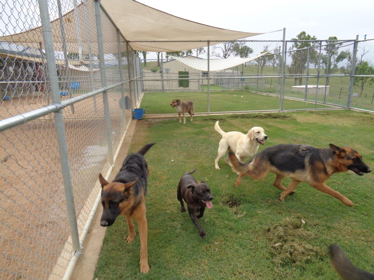 Townsville Kennels For Dogs