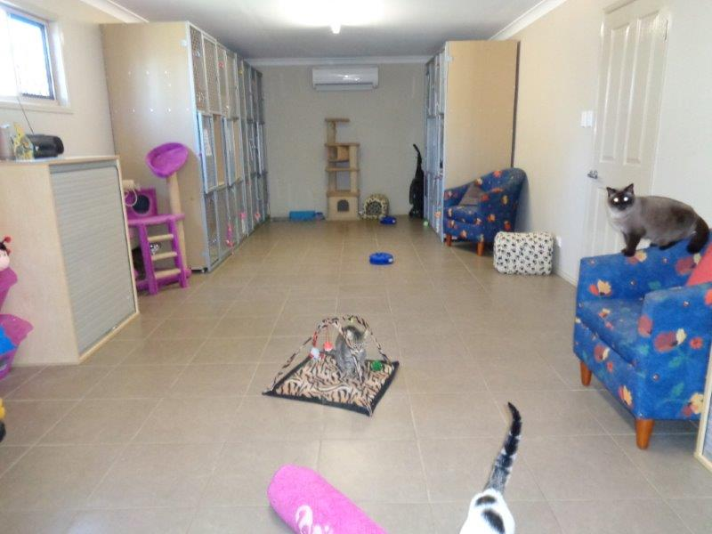 Internal Free Play area in the cattery